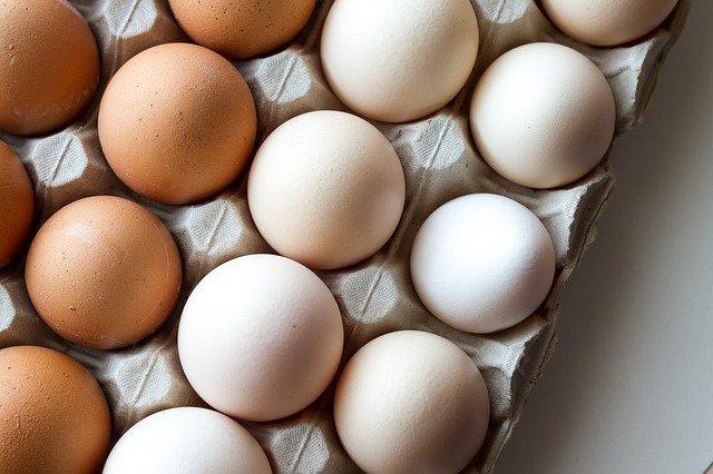 wpływ białka na organizm